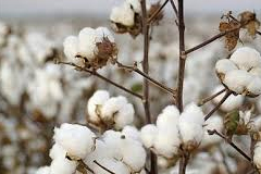 Cotton Industries